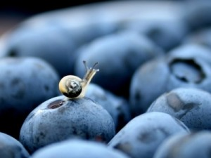 Les antioxydants jouent un rôle important dans notre vie