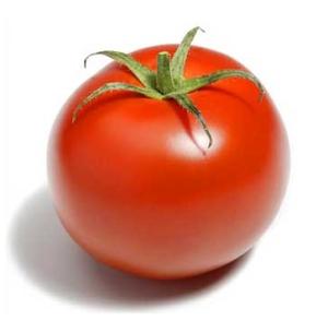 Antioxydant puissant nouveau trouv dans la tomate for Noctuelle de la tomate