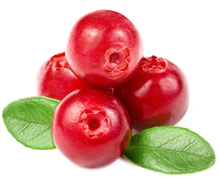 Le pouvoir antioxydant remarquable de canneberges cranberry bio