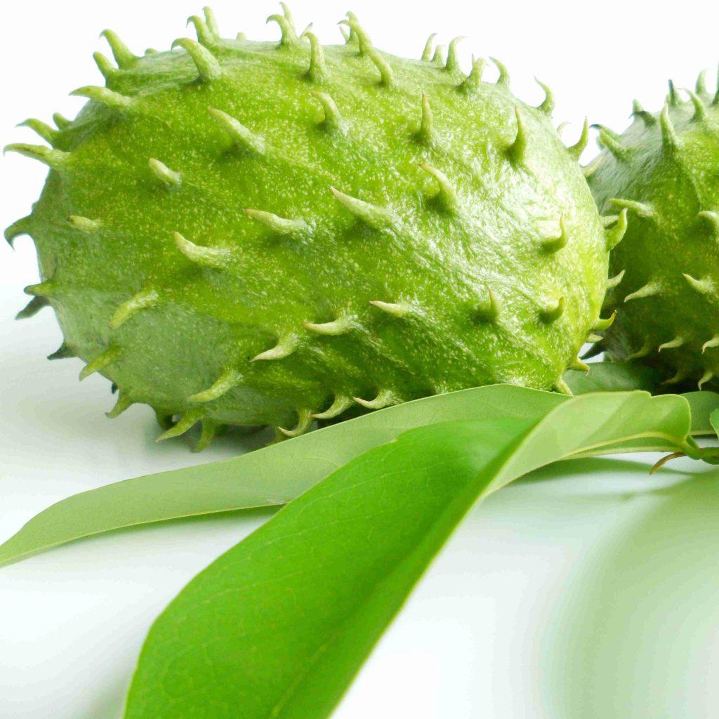 Le fruit et la feuille de graviola corossol un anticancer naturel puissant